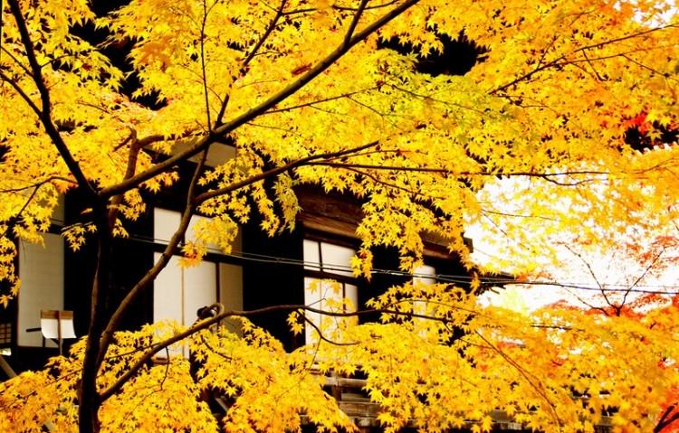 [Vidéo] Magnifique !!!  - Page 2 Kyoto035