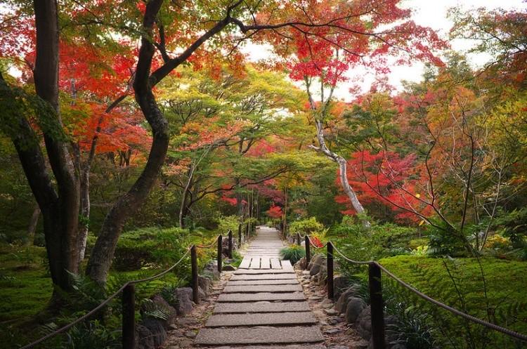 [Vidéo] Magnifique !!!  - Page 2 Kyoto036