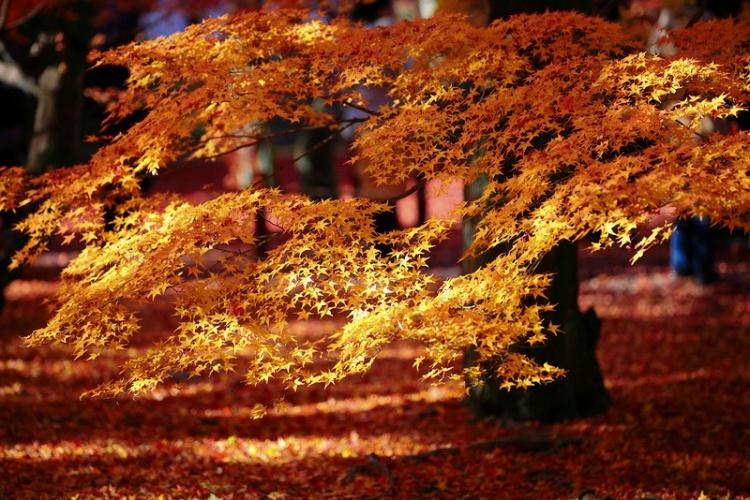 [Vidéo] Magnifique !!!  - Page 2 Kyoto038