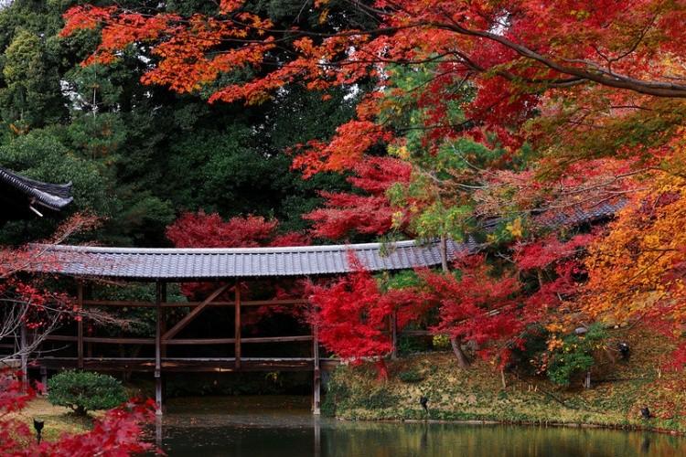 [Vidéo] Magnifique !!!  - Page 2 Kyoto039
