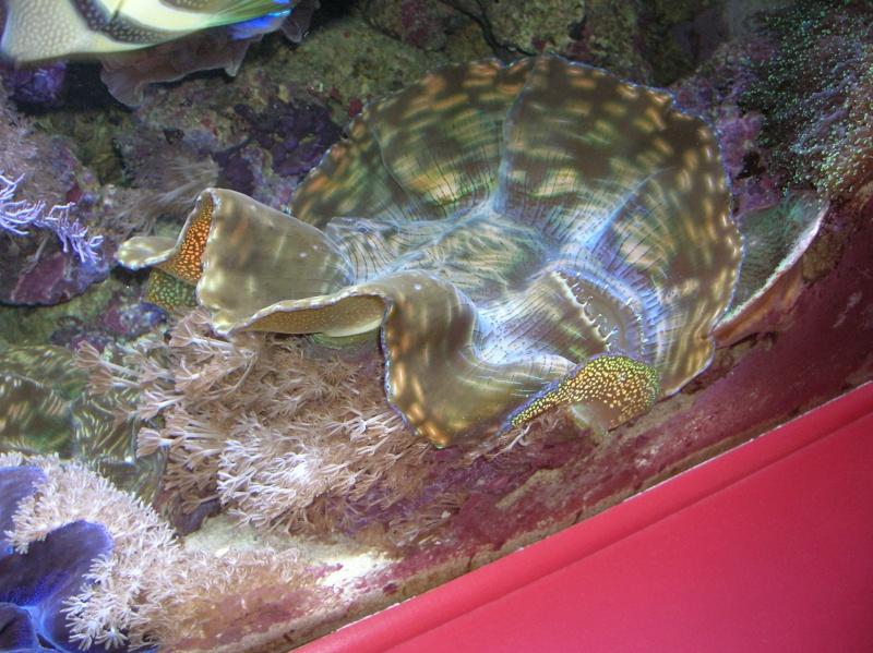 photos de poissons et coraux  - Page 6 Dscn1616