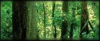 Forêt de Bralien