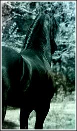 love~horse~free