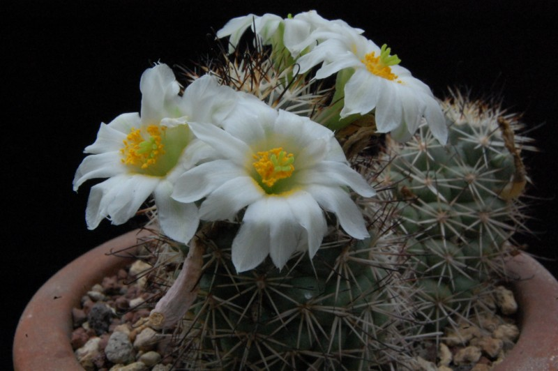 E' arrivata la primavera nella mia serra..... 328-2012