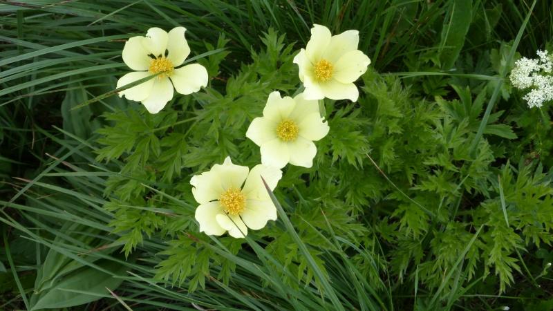 Flore du massif - Page 6 P1040610