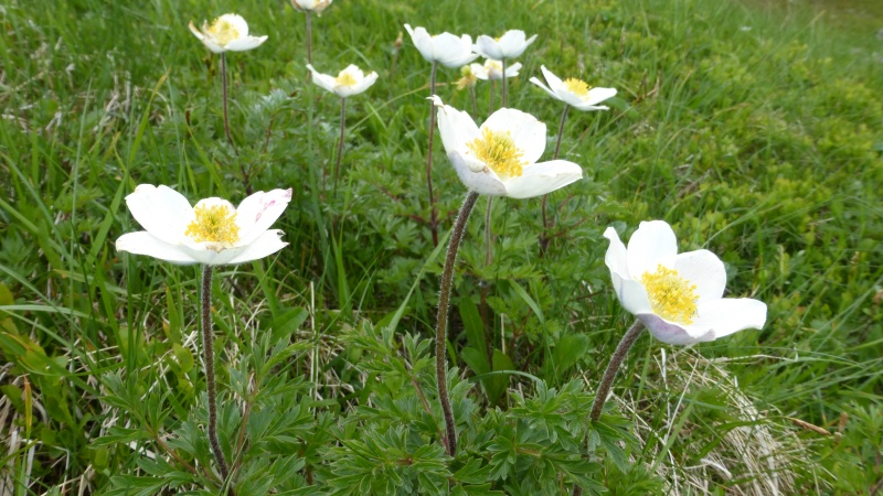 Flore du massif - Page 6 P1040611
