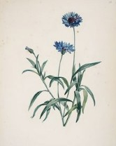5 juillet : une ou des fleurs Sans_t22