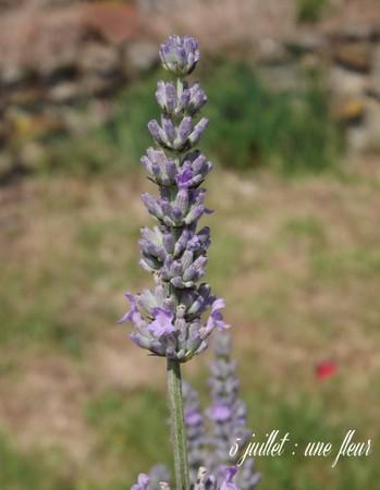 5 juillet : une ou des fleurs Sans_t29