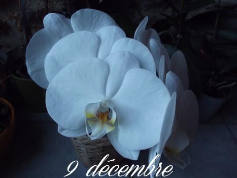 9 décembre Sans_t90