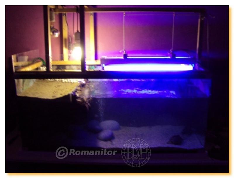 exemples d 39 aquariums pour tortues aquatiques. Black Bedroom Furniture Sets. Home Design Ideas