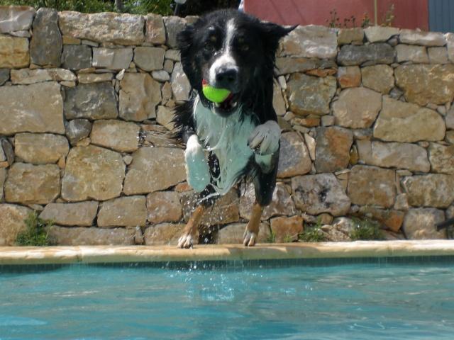 """FINALE du concours """" Nos Borders et l'eau"""". Votez jusqu'au 22 août 2010 Divers13"""