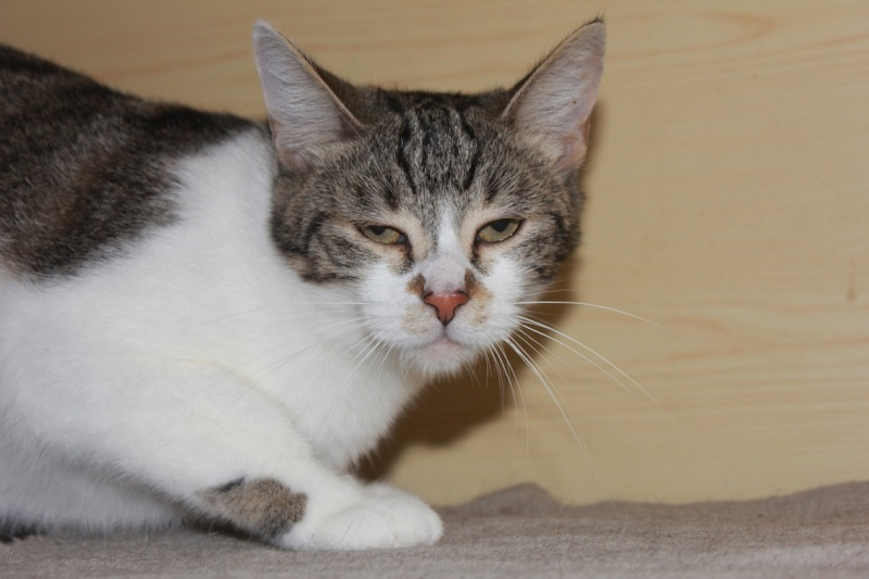 Lune a adopter Lune210