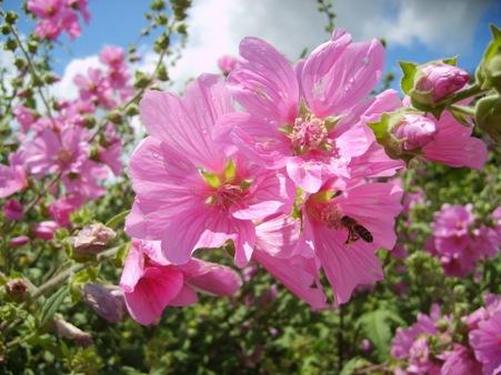 La fleur et l'abeille La_fle10