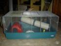 Cage Mary de ferplast à vendre 88284610