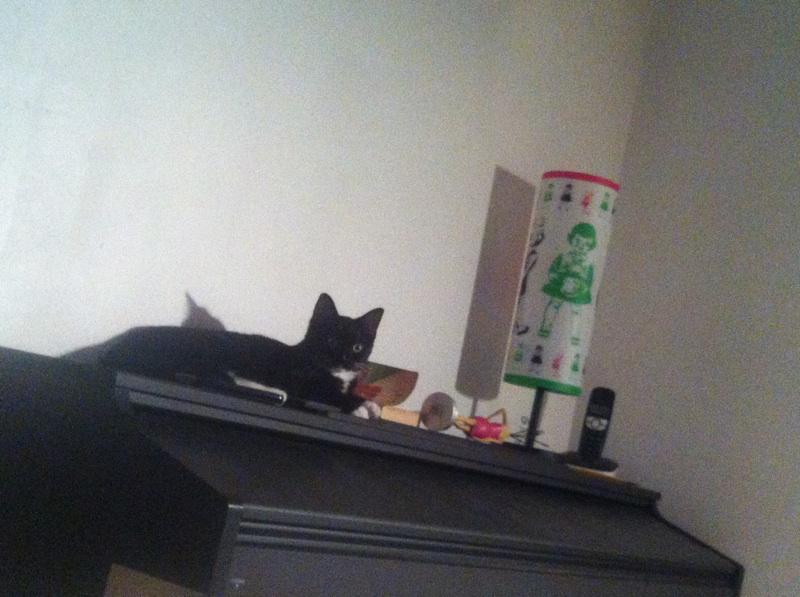 SOQUETTE, adorable chatonne de deux mois noire avec chaussons blancs - Page 3 Img_3111