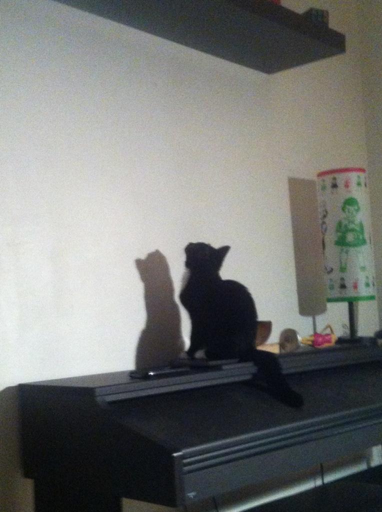 SOQUETTE, adorable chatonne de deux mois noire avec chaussons blancs - Page 3 Img_3112