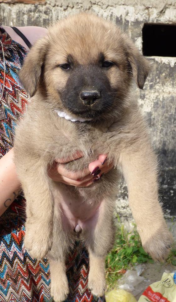 RICCY, chiot femelle, née en avril 2016 (Pascani)- REMEMBER ME LAND(DCD) 13439210