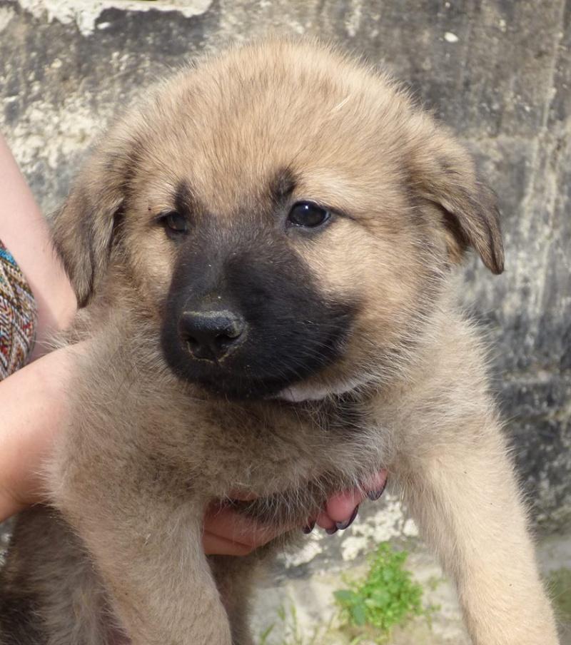 RICCY, chiot femelle, née en avril 2016 (Pascani)- REMEMBER ME LAND(DCD) 13466510