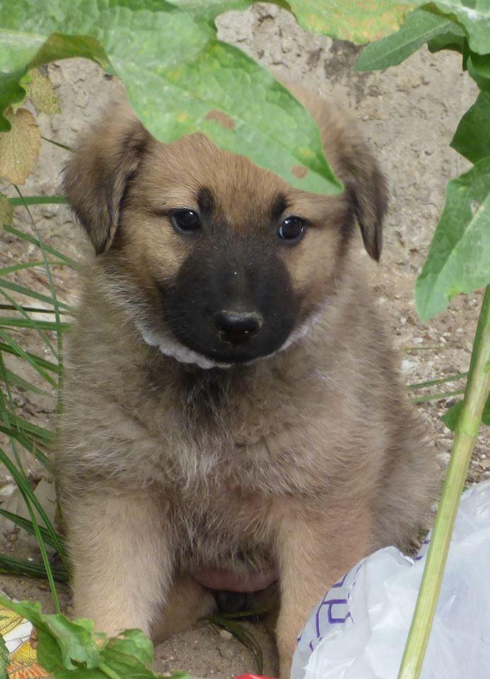 RICCY, chiot femelle, née en avril 2016 (Pascani)- REMEMBER ME LAND(DCD) 13494911