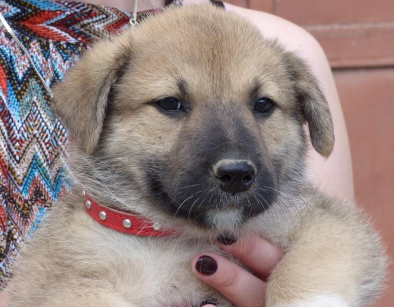 RICCIA, chiot femelle, née en avril 2016 (Pascani)- REMEMBER ME LAND 13497510