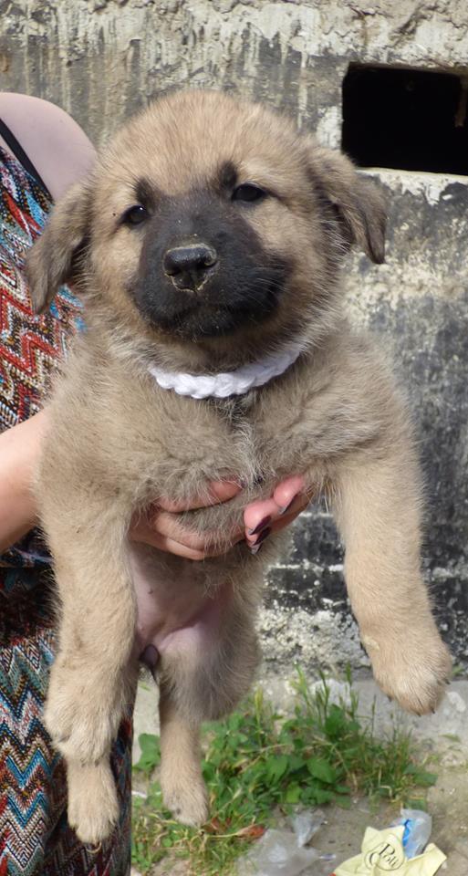 RICCY, chiot femelle, née en avril 2016 (Pascani)- REMEMBER ME LAND(DCD) 13516510