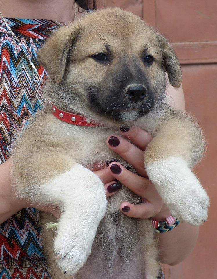 RICCIA, chiot femelle, née en avril 2016 (Pascani)- REMEMBER ME LAND 13557910