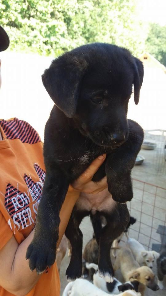 ALOYA, chiot femelle, née en avril 2016 - Pascani - REMEMBER ME LAND - DCD 13664417