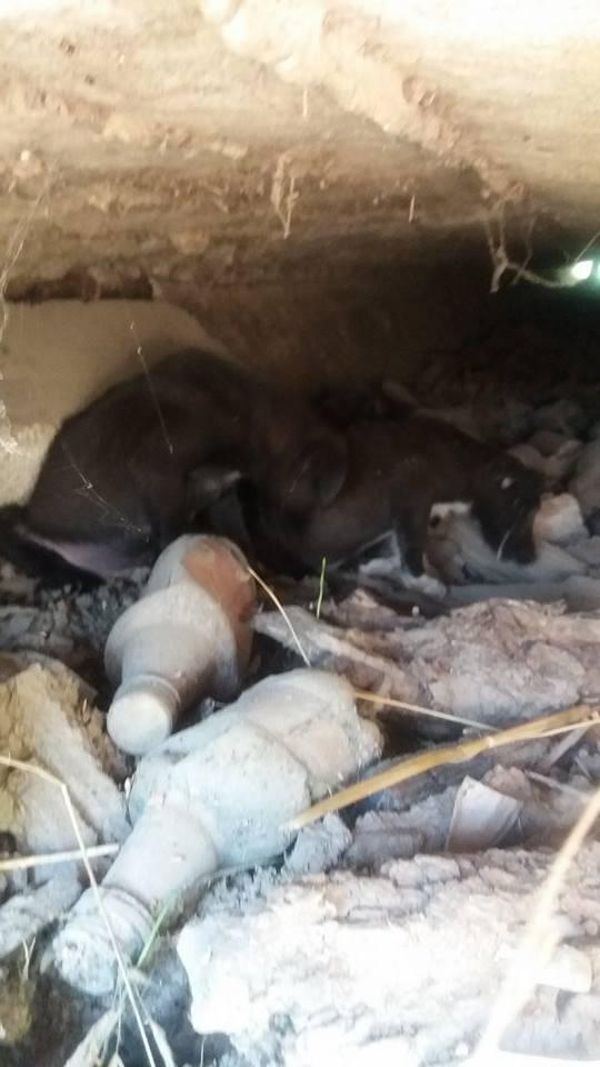 MELO, chiot mâle, né en mai/juin 2016 (Pascani) - REMEMBER ME LAND - Adopté par Véronique (Belgique) 13689414