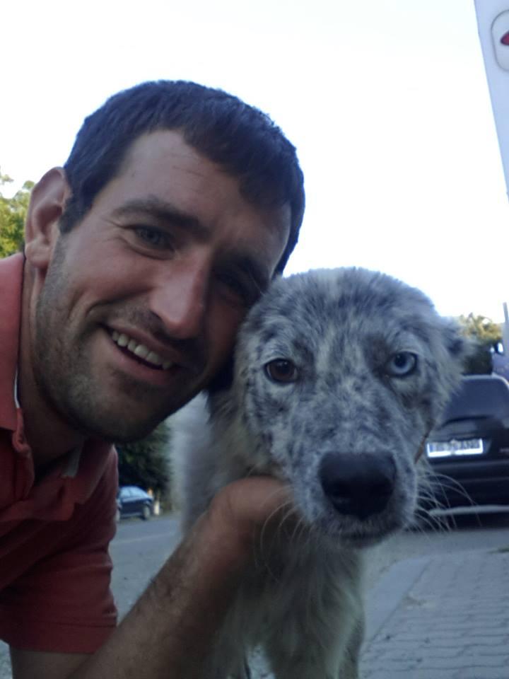 LILI-BLUE (ex BLUESKY),  femelle, sourde aux yeux vairons croisée nordique, taille moyenne, née en 2013(Pascani)- adoptée par Sabrina (34) 13819411