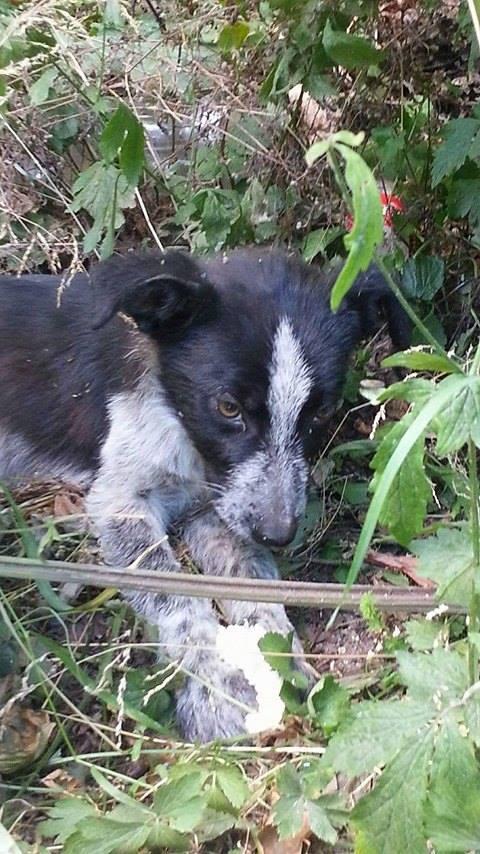FANTA, chiot mâle, né en mars 2016 - (Pascani) - REMEMBER ME LAND - décédé 13883910