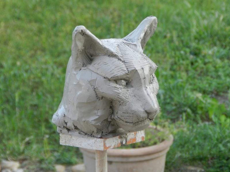 Tête de chat Dscn0110