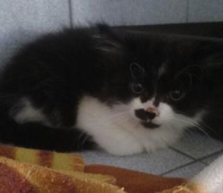 1 chaton mâle, 1mois 1/2, Var Chaton12