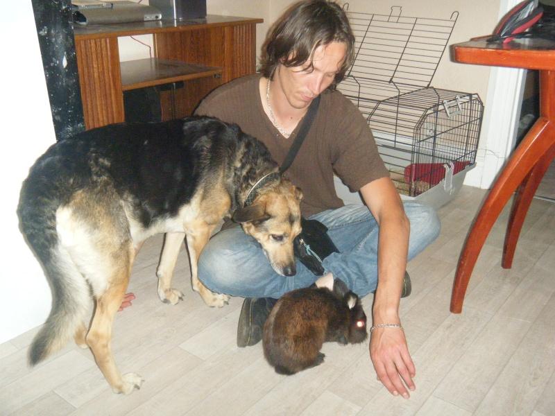 SOS pour une chienne de 11 ans !! propriétaire DECEDE - Page 2 Chez_n13