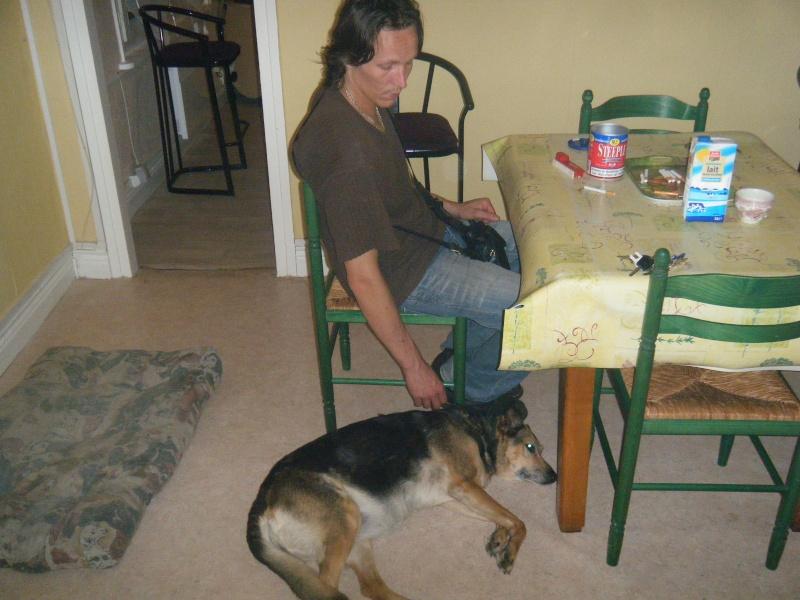 SOS pour une chienne de 11 ans !! propriétaire DECEDE - Page 2 Chez_n14