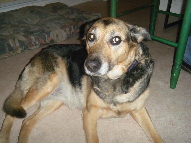 SOS pour une chienne de 11 ans !! propriétaire DECEDE - Page 2 Chez_n15