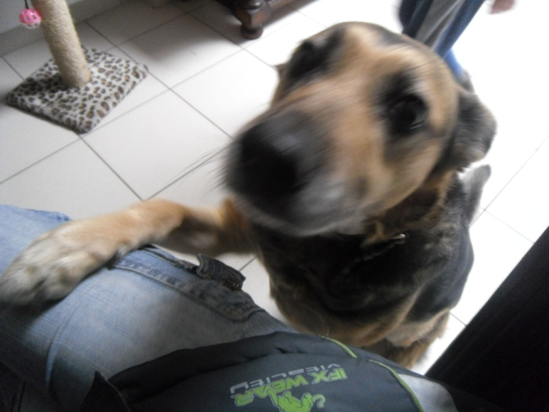 SOS pour une chienne de 11 ans !! propriétaire DECEDE Prunel10