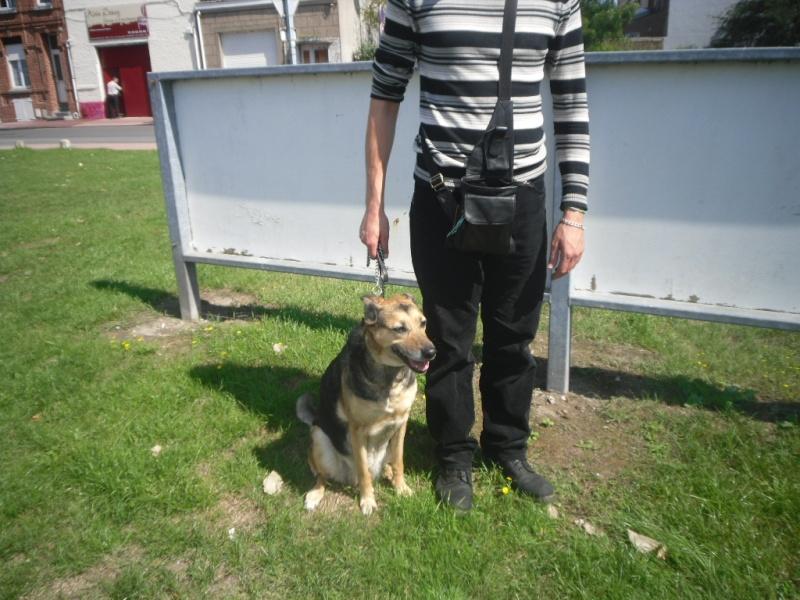 SOS pour une chienne de 11 ans !! propriétaire DECEDE - Page 2 Sam_0610