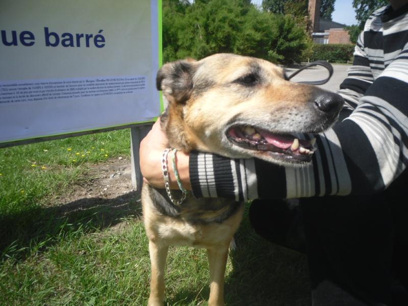 SOS pour une chienne de 11 ans !! propriétaire DECEDE - Page 2 Sam_0611