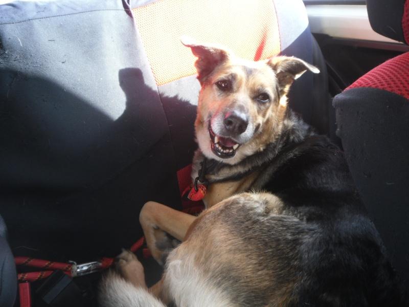 SOS pour une chienne de 11 ans !! propriétaire DECEDE - Page 2 Voitur11
