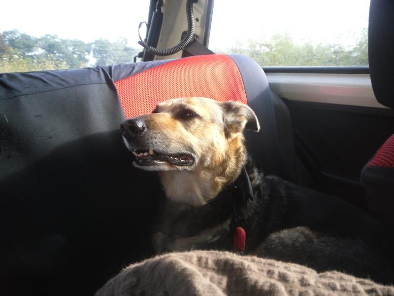 SOS pour une chienne de 11 ans !! propriétaire DECEDE - Page 2 Voitur12