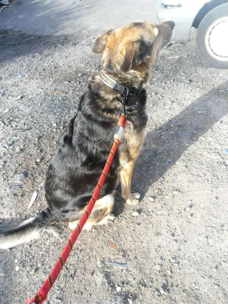 SOS pour une chienne de 11 ans !! propriétaire DECEDE - Page 2 Voitur14