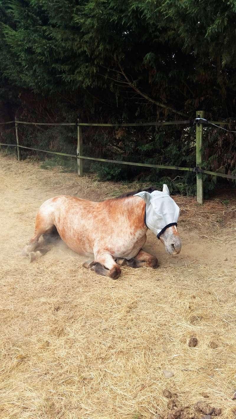 INDIANA - OI type poney née en 1994 - adoptée en juillet 2016 par Adeline 20160712