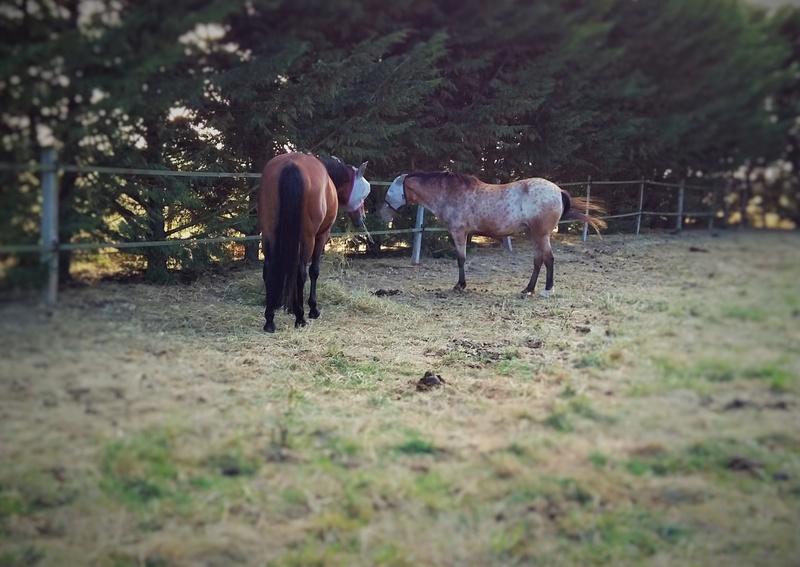 INDIANA - OI type poney née en 1994 - adoptée en juillet 2016 par Adeline 20160810