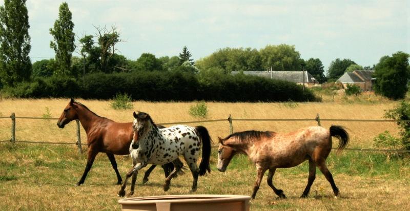 INDIANA - OI type poney née en 1994 - adoptée en juillet 2016 par Adeline Img_0910