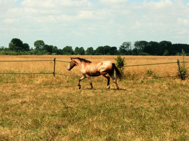 INDIANA - OI type poney née en 1994 - adoptée en juillet 2016 par Adeline Img_0911