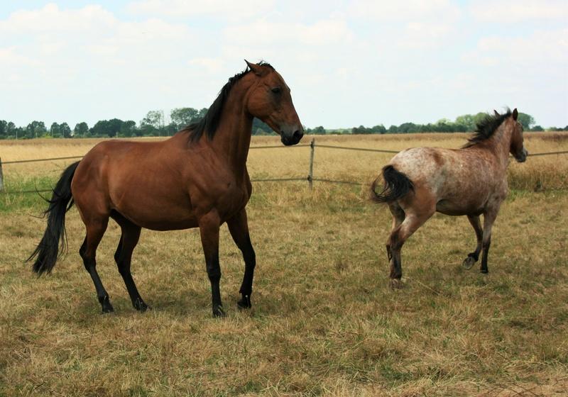 INDIANA - OI type poney née en 1994 - adoptée en juillet 2016 par Adeline Img_0914