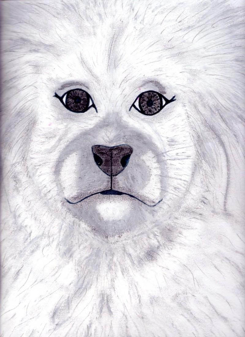 pastel portrait animalier  Dessin39