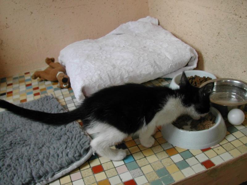 Tara, chaton noir et blanc Dscn9839