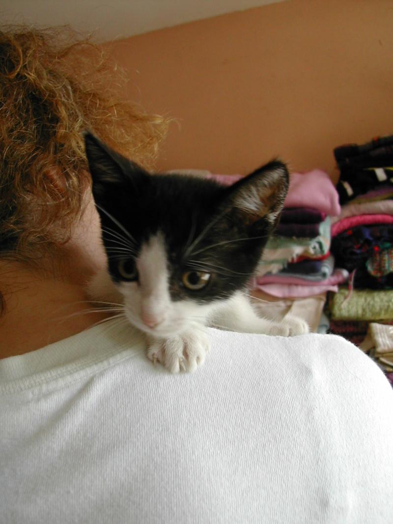 Tara, chaton noir et blanc Dscn9841