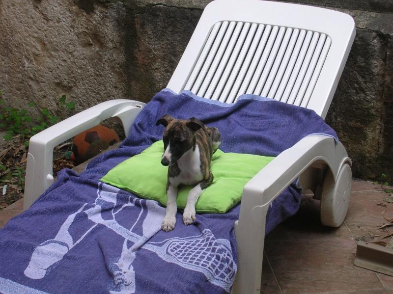 Confort d'été (27 juin 2010) Doushk10